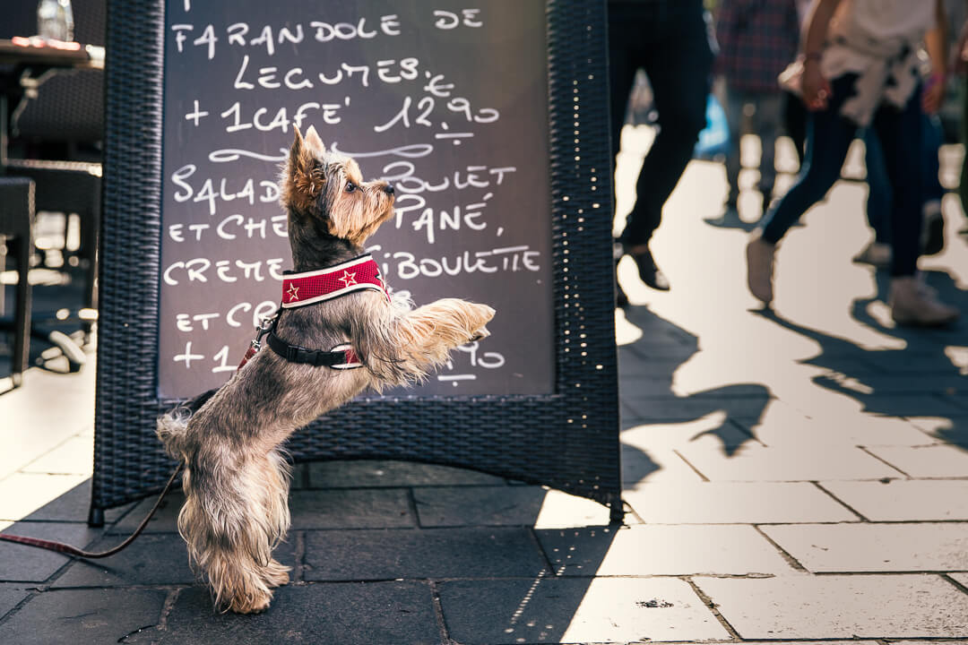 blog-on-dogs-in-restaurants-002