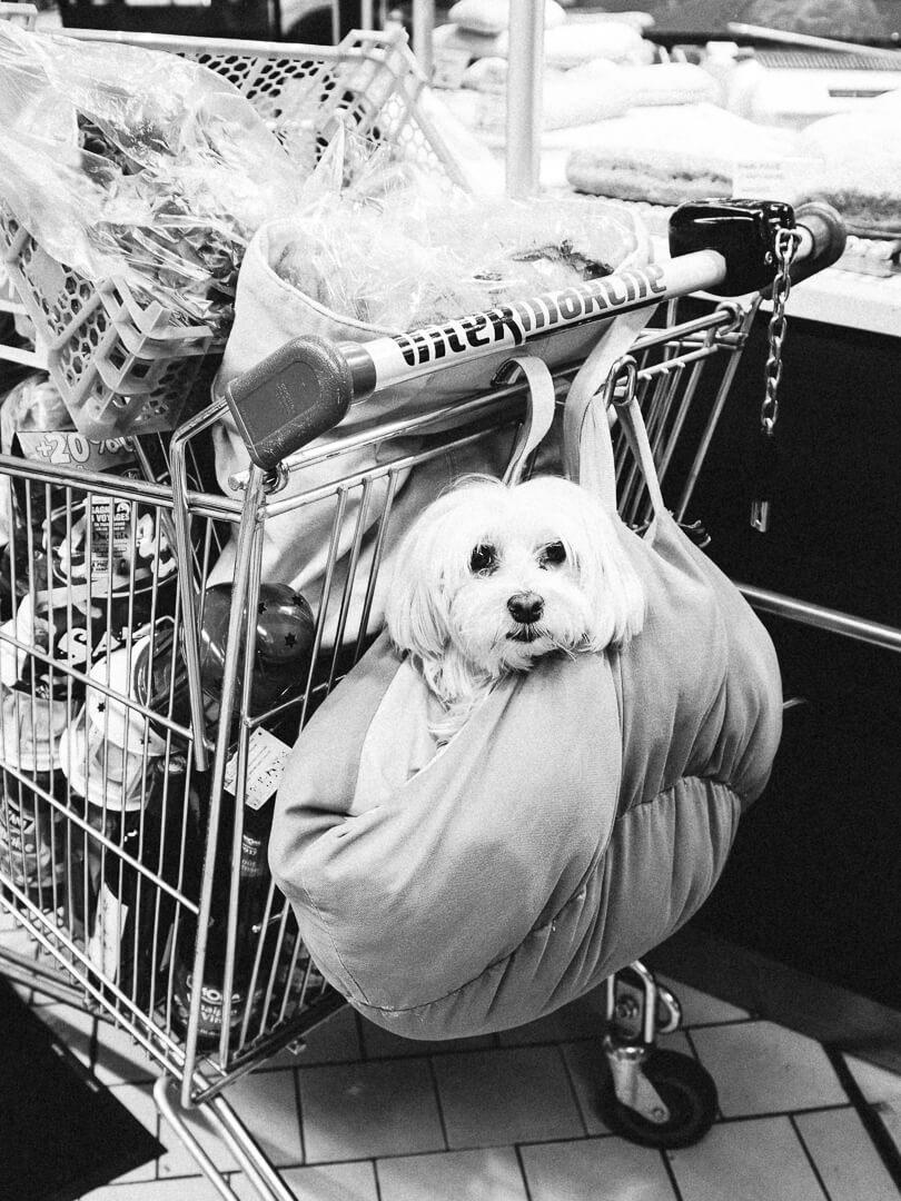 blog-on-dogs-in-restaurants-007