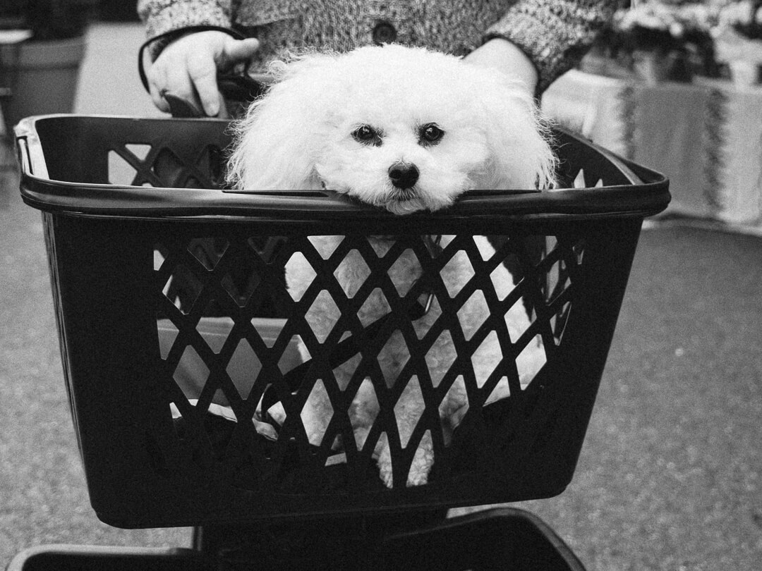 blog-on-dogs-in-restaurants-008